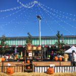 Harvest Festival at Shops at Don Mills