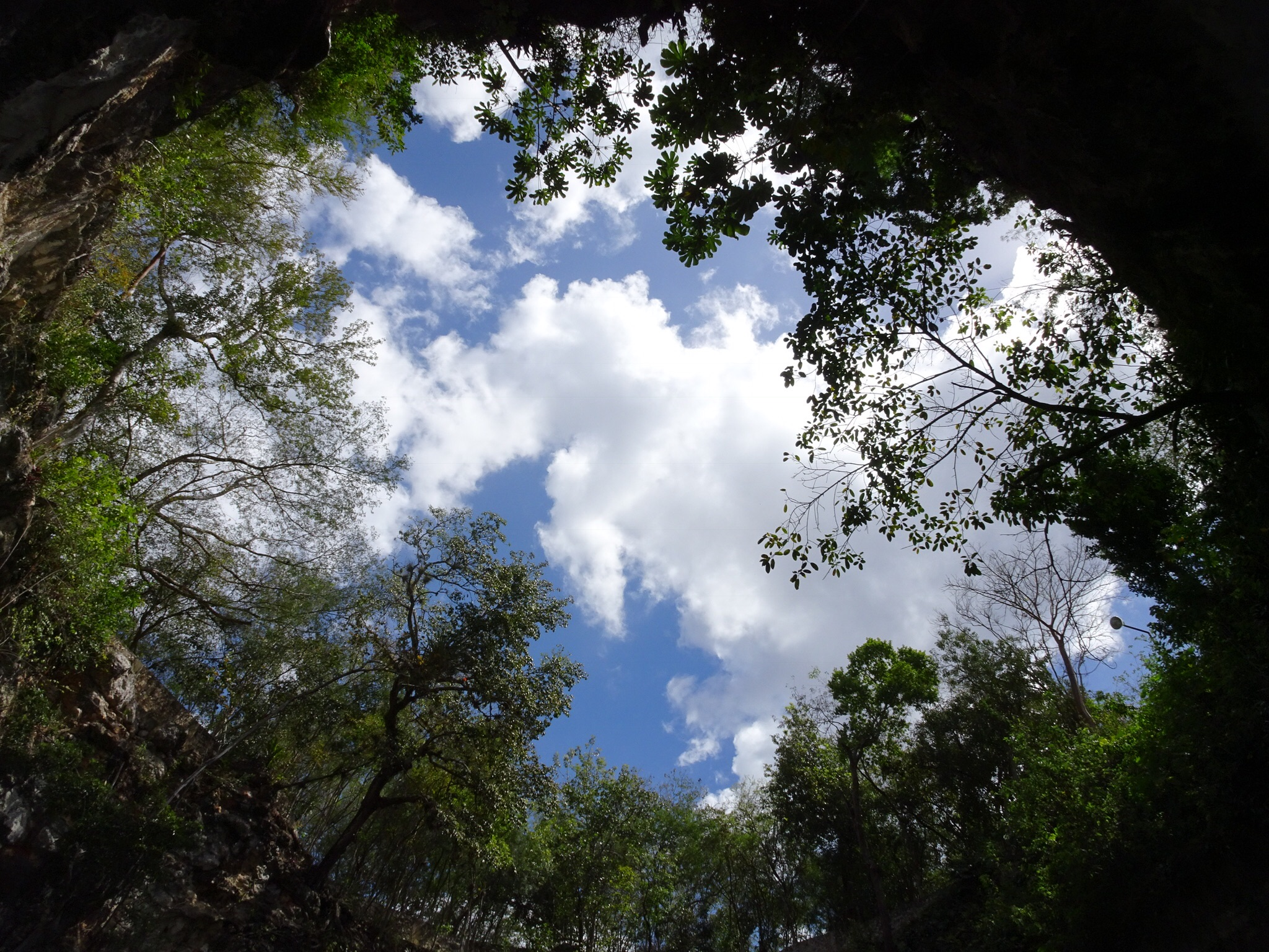Cenote view above